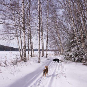 Talvi jatkuu